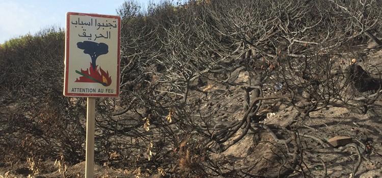 230 ha de massifs forestiers partis en fumée à l'ouest de Tanger.