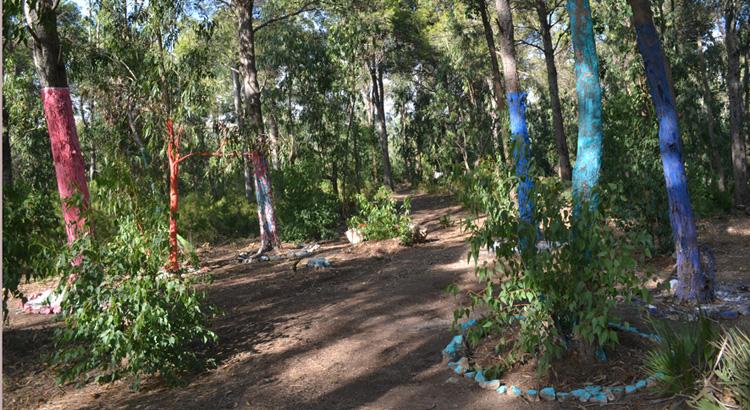 Sanae Alami La danse des arbres- Forêt de Nakkata